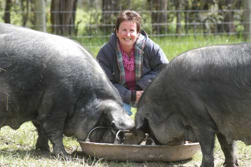 Christine Ross and two Large Black sows